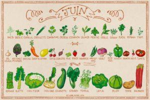 Calendrier des fruits et légumes de saison en juin