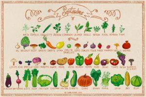 Calendrier des fruits et légumes de saison en septembre