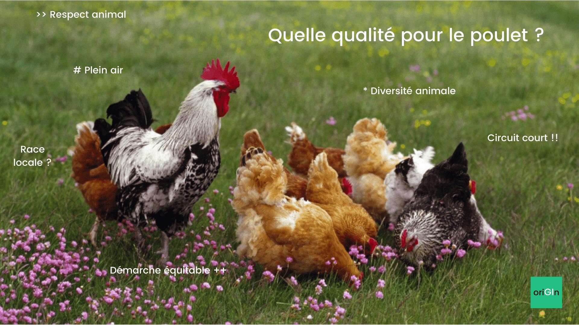 Comment choisir un poulet de qualité