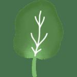 Epinard légume de saison